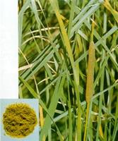 Cattail Pollen Extract